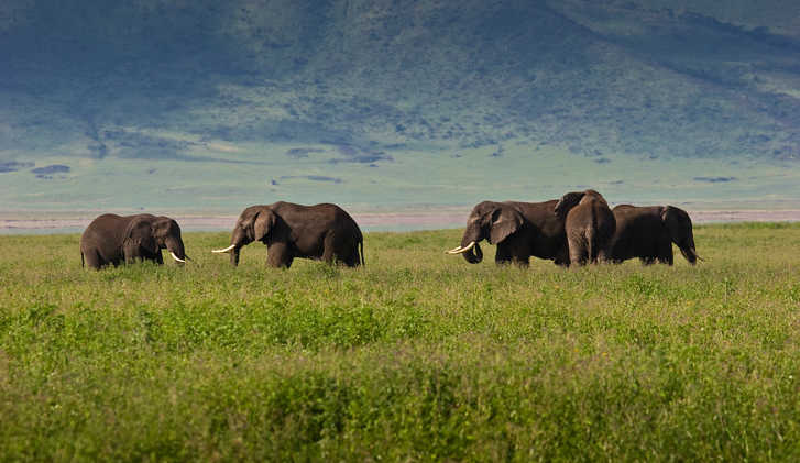 Viewing elephants on a safari holiday