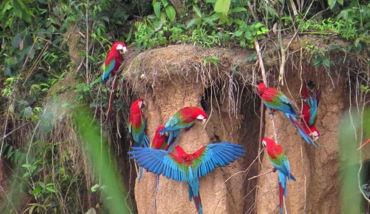 Amazon Rainforest Trips, Amazon Rainforest Tours, Amazon